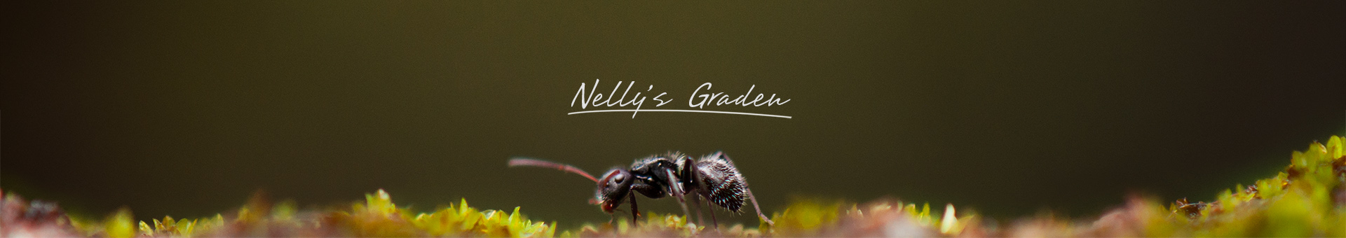 HEADER NELLY GARDEN 1